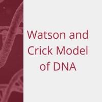 Watson and Crick Model of DNA