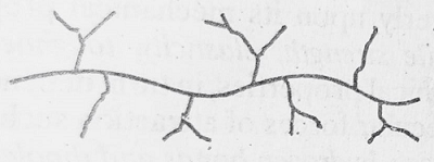 branched chain polymer - Polymer- Structure and Classification