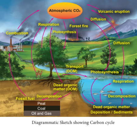 carbon cycle - What is Carbon Cycle? Process of Carbon Cycle