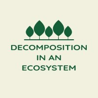 Decomposition in an Ecosystem