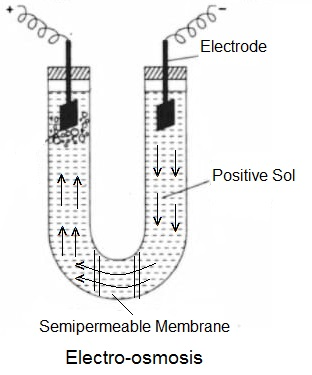 Electro osmosis - Electrical Properties of Colloidal Sols