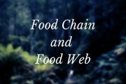 Concept of Food Chain and Food Web