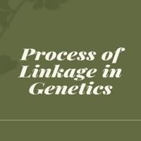 Process of Linkage in Genetics