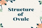 Structure of Ovule