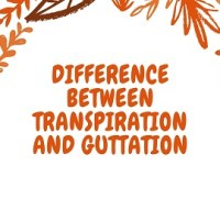 Difference Between Transpiration and Guttation