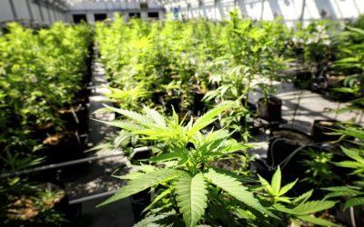 Colo. To Combat Opioid Crisis With Medical Marijuana