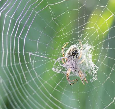 Araignées (1) (Medium)