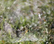 Araignées (2) (Medium)