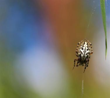 Araignées (6) (Medium)