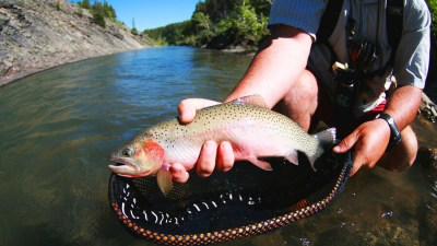Glacier National Park Fly Fishing, Cutthroat Trout