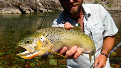 Westslope Cutthroat Trout, Montana Fly Fishing, Glacier Raft Company