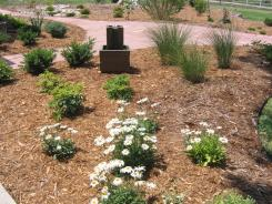 Water fountain framed by Shasta Daisies and Maiden Grasses