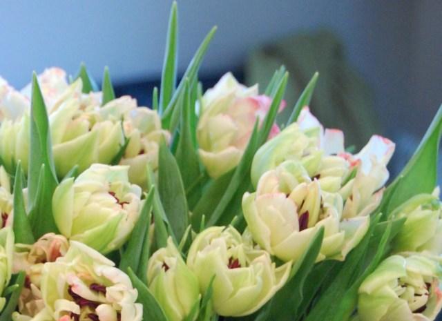 Dubbla tulpaner i vitt rosagrönt (2)