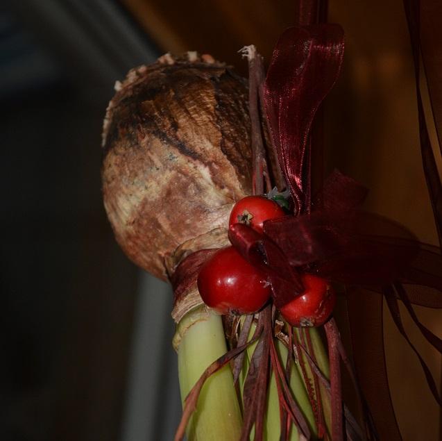 Den dekorativa amaryllislöken tillsammans med paradisäpplen