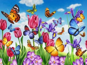 Fjärillar blommor sommar