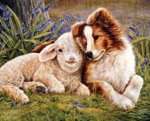 Hund lamm