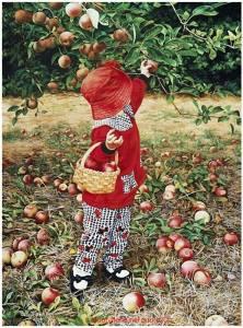 Flicka plockar äpplen