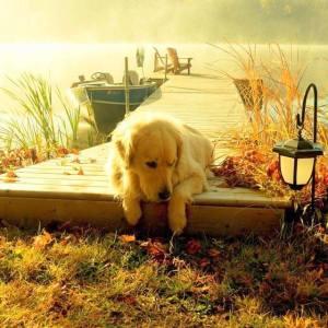 Hund brygga båtar
