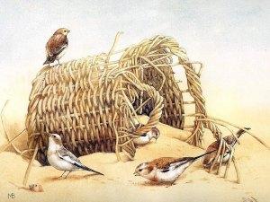 Fåglar korg