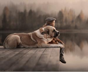 Pojke  hund kram brygga