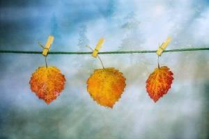 Löv tvättlina