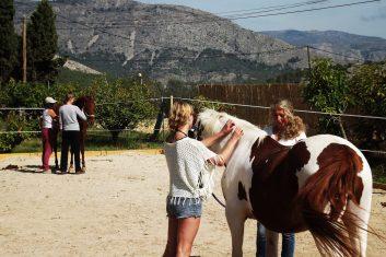 Häst events