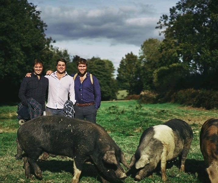 Gregory, Bros and pigs