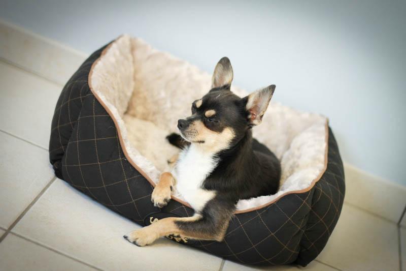 Acheter son chien en animalerie, est-ce une bonne idée ? Comment les animaux y sont-ils traités ? Sont-ils en bonne santé ? Epanouis ? Gardent-ils des séquelles de ce morceau de vie passée en vitrine ? Découvrez l'histoire d'Hélium, petit chihuahua ayant vécu plusieurs mois dans une cage en verre.
