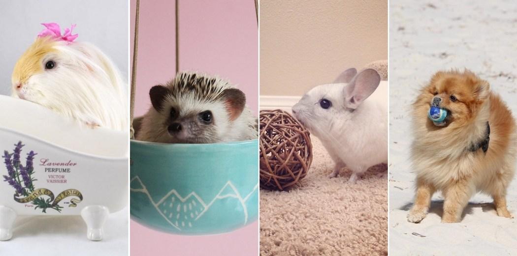 comptes-instagram-animaux-mignons