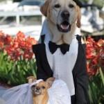 cane con cravattino Glam Events 1