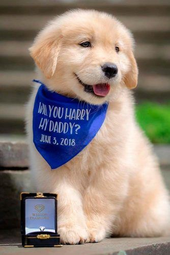 Cute Marriage Proposal Ideas With Friends, Family And Pets