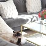 Hidden Gem: Online Home Decor Shopping Site