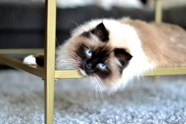 The Best Pet Insurance Plan Ever Made for Cats!
