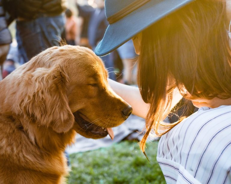 Basic Puppy Training – What You Need To Know