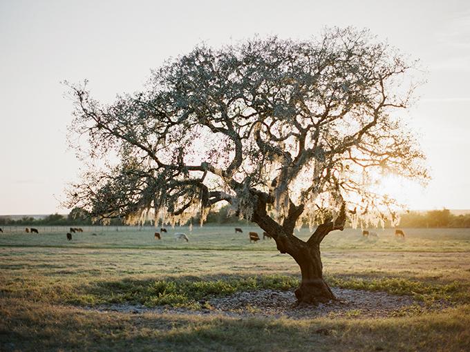 Florida ranch wedding | Caroline Maxcy Photography | Glamour & Grace