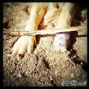 Daisy cut her paw. :(