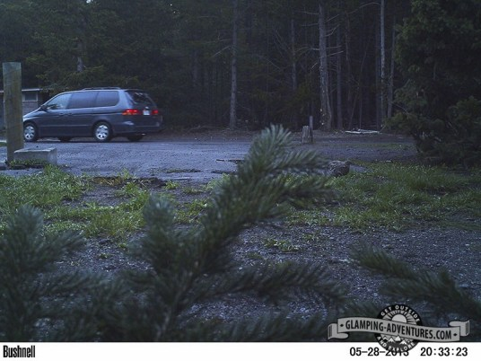 Critter cam at campsite, Dusky Grouse, YNP.