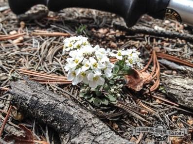Tiny flowers, Mueller SP, CO.