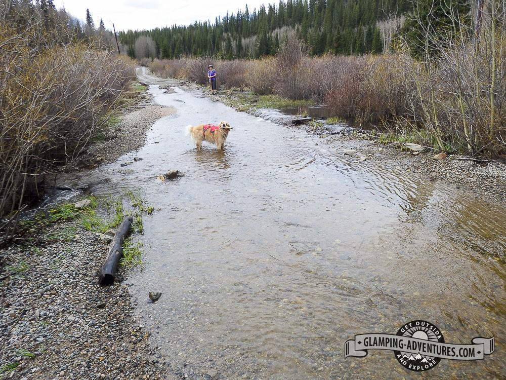 Daisy playing in Kenosha Creek as it crosses the road FR 126. Kenosha Pass, CO