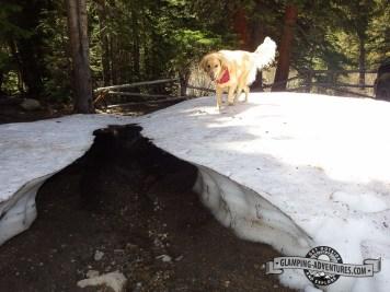 Daisy on a snow bridge. Leadville, CO