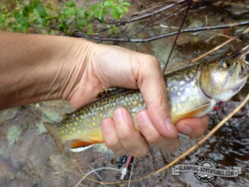 Plenty of brook and rainbow trout in the creek.