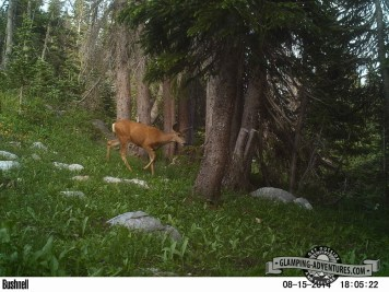 Trailcam at campsite.
