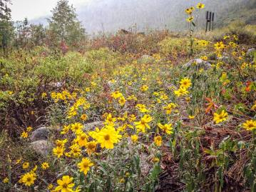 It may be rainy, but is it still beautiful. Seedhouse Road, Steamboat Lake, CO.