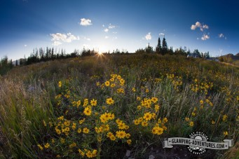 The last of the wildflowers until next year. Steamboat Lake, CO.
