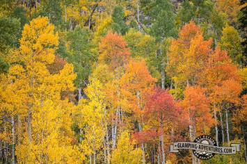 We love the darker, orange, aspens. Sylvan Lake S.P.
