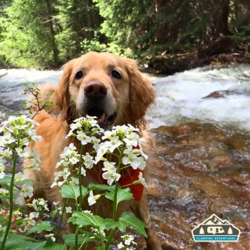 Daisy at the stream, in the site. Gore Creek CG, Vail CO.
