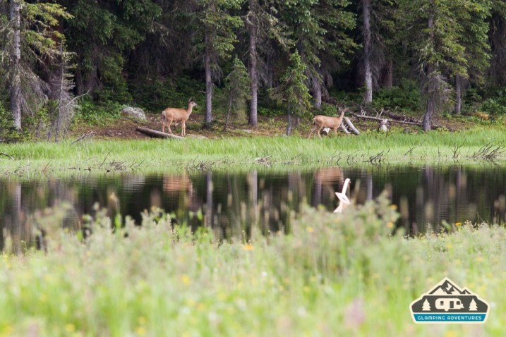 Deer across the lake. Arch Slough, Grand Mesa CO.