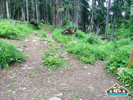 Trail/road junction near Forest Lake. Grand Mesa CO.