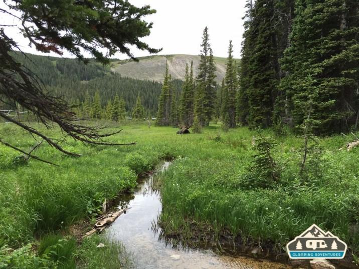 Moose enjoying the afternoon. Longs Lake Trail.