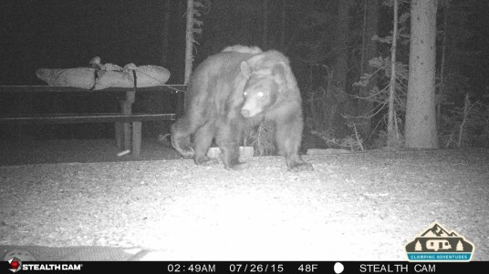 4. Bear walking through our site.